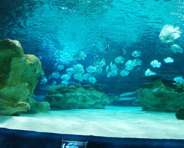 海洋馆园燕类群鱼