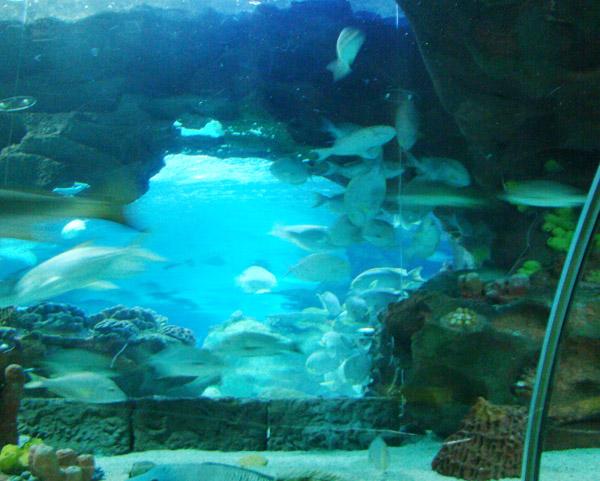 海洋馆造景