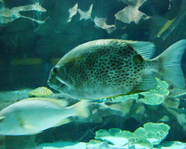 海洋馆鱼类混养