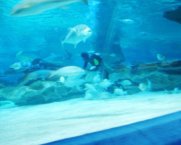 海洋馆内清理池底