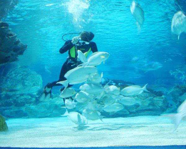 海洋馆人鱼互动