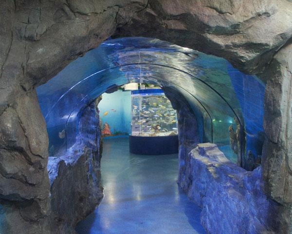 水族馆亚克力鱼缸工程