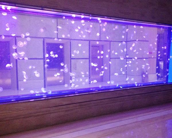 北京永利酒店鱼缸